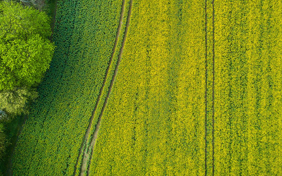 agriculture - Vivid Air - Professional Drone Photography